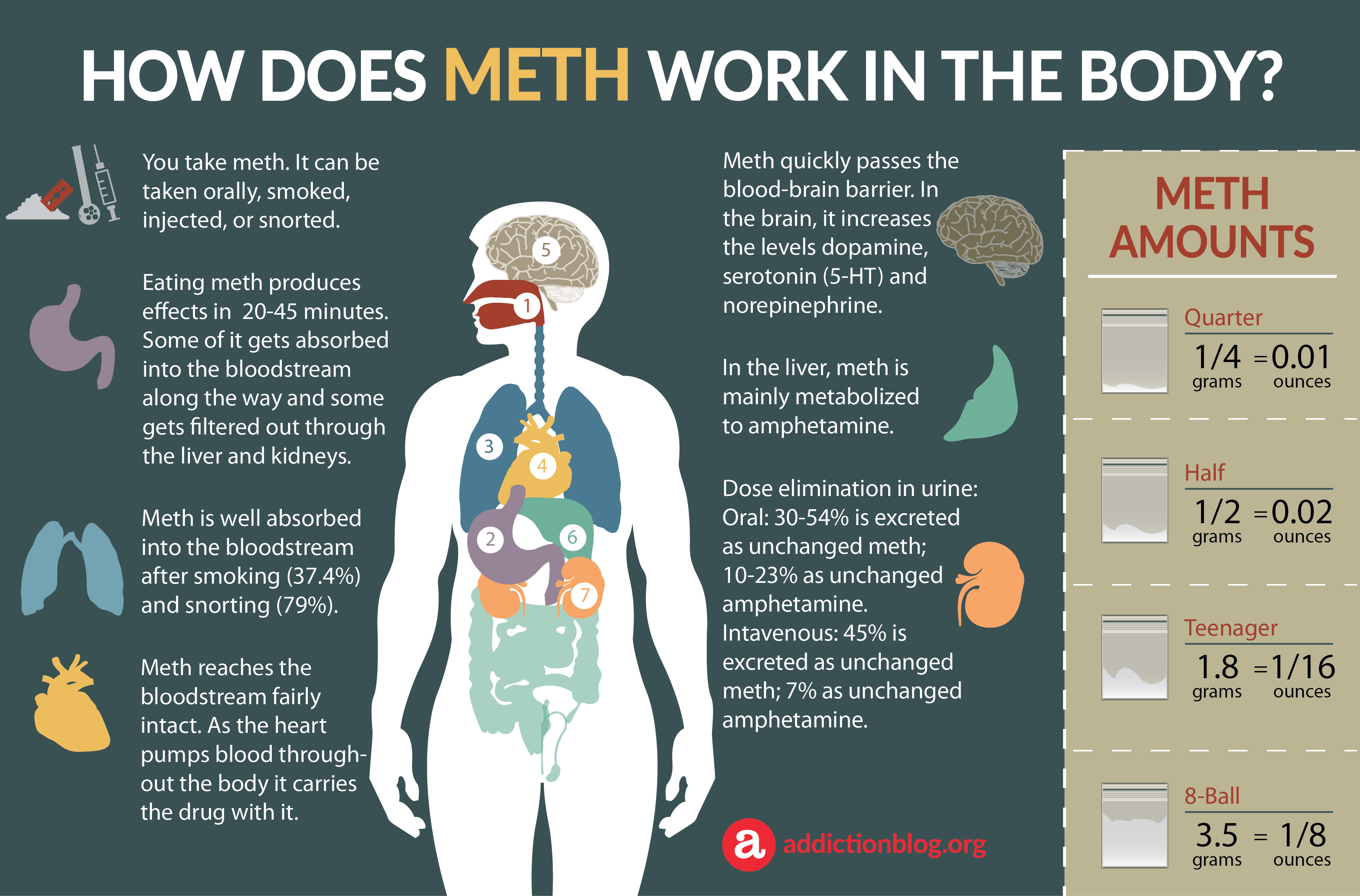 how long does meth stay in your system